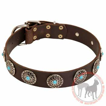 Pit Bull Dog Leather Collar Skillfully Adorned