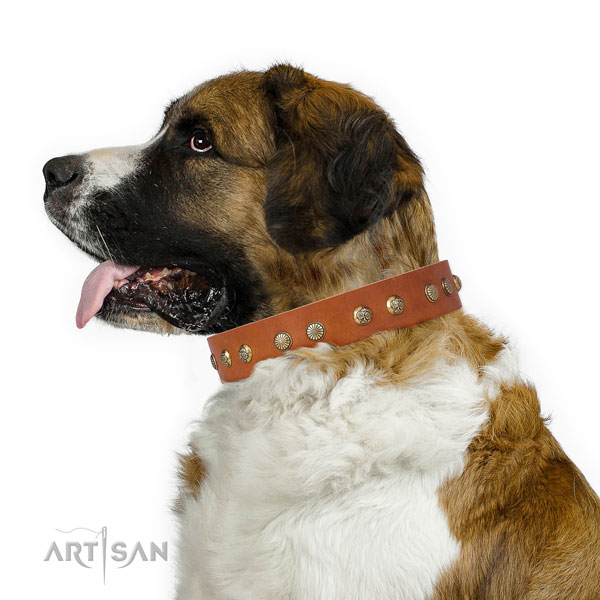 Exceptional studs on daily walking full grain natural leather dog collar