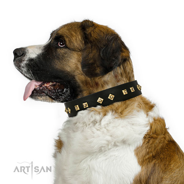 Unique adornments on basic training full grain natural leather dog collar
