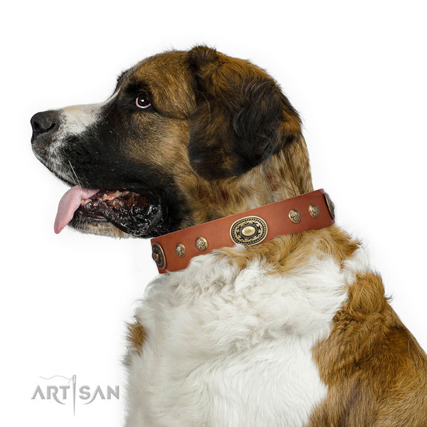 Stylish adornments on everyday use dog collar