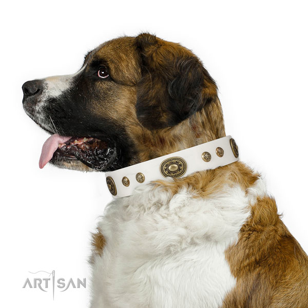 Awesome adornments on fancy walking dog collar