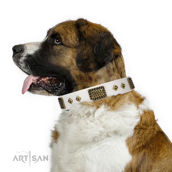 Everyday walking dog collar of natural leather with amazing studs