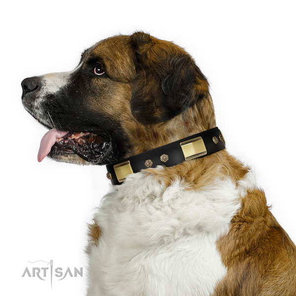 Comfy wearing dog collar of natural leather with stunning studs