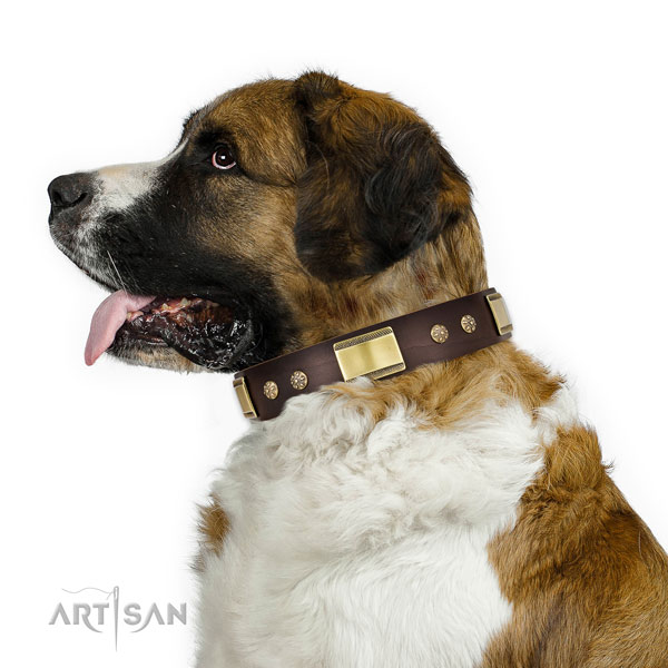 Everyday walking dog collar of natural leather with trendy adornments