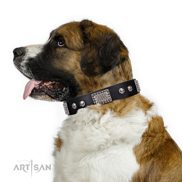 Top notch leather collar for your impressive four-legged friend