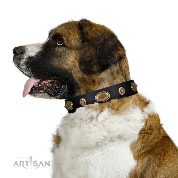 Stylish walking dog collar of genuine leather with exquisite adornments