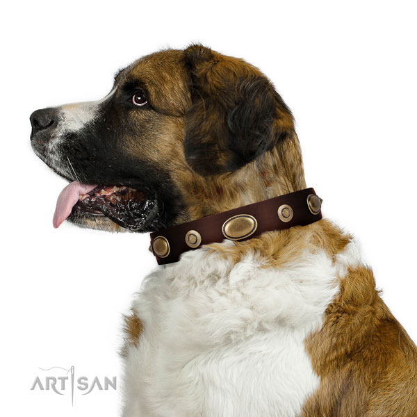 Fancy walking dog collar of natural leather with incredible decorations