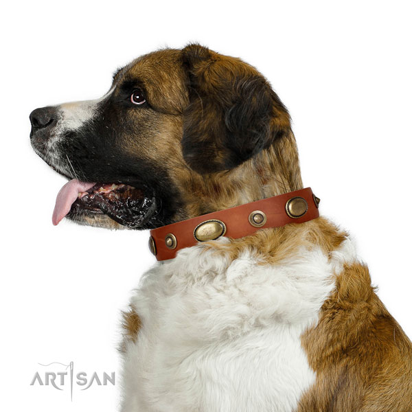 Daily walking dog collar of leather with impressive embellishments