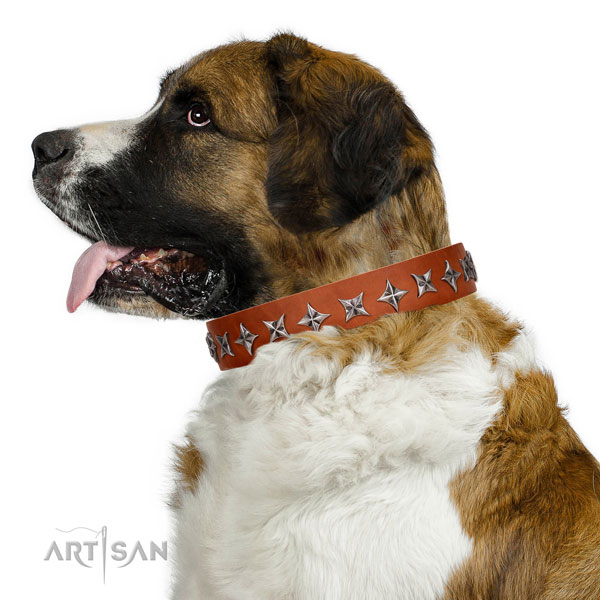 Reliable leather dog collar with unusual studs