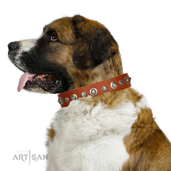 Reliable leather dog collar with stunning adornments