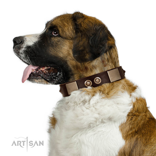 Durable fittings on full grain leather dog collar for walking
