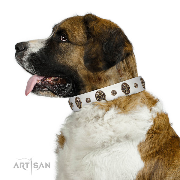 Daily walking dog collar of genuine leather with extraordinary studs