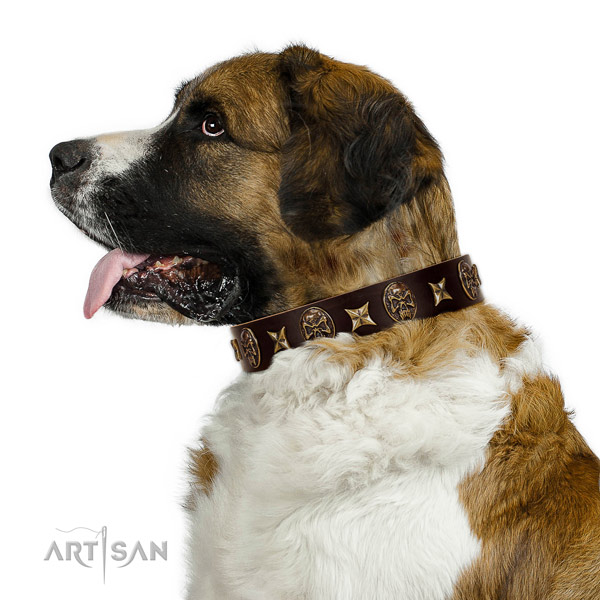 Comfortable wearing dog collar of leather with significant embellishments
