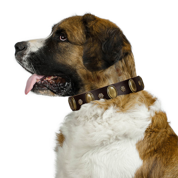 Fancy walking high quality full grain leather dog collar with studs
