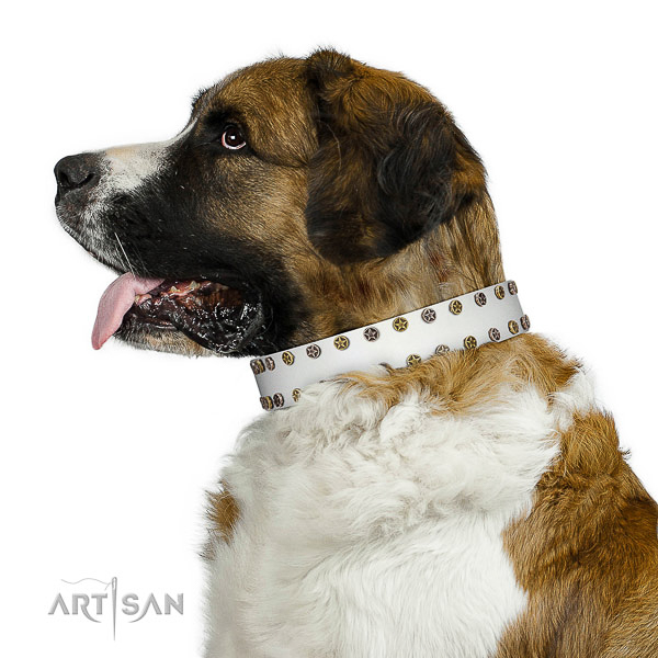 Stylish leather dog collar with rust resistant studs