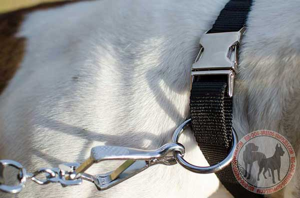 Nickel O-ring And Quick Release Buckle stitched to Nylon Dog Collar