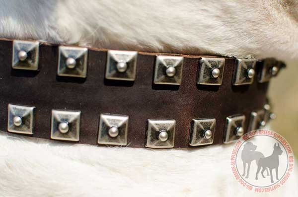 Collar with 2 rows of riveted studs