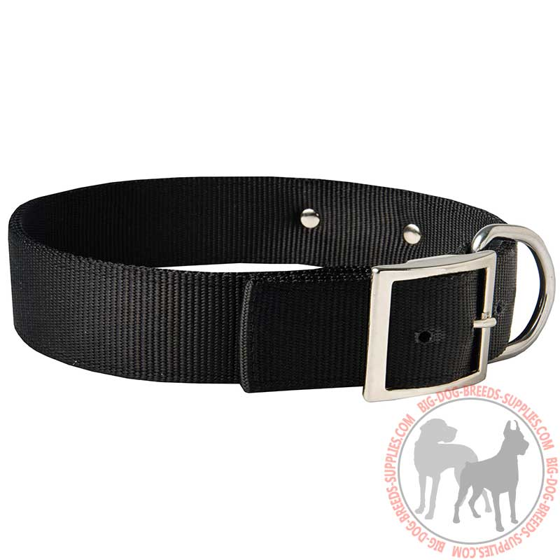Buy Nylon American Bulldog Collar with Identification Tag