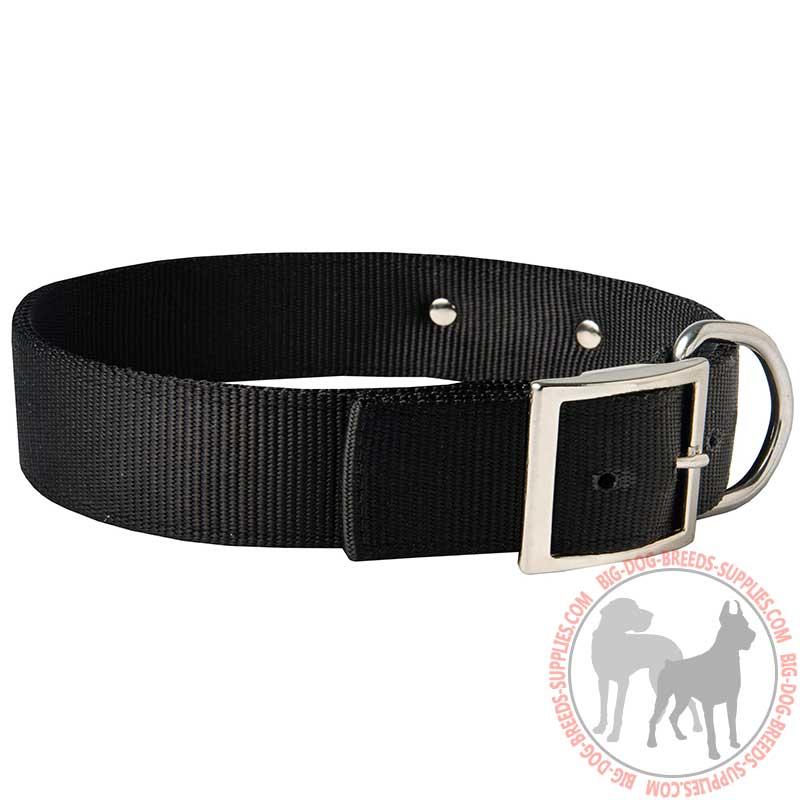 Adjustable Collar Dog Tag