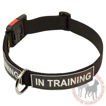Identification Nylon Dog Collar