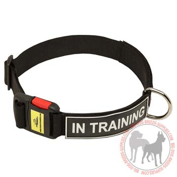 Dog Nylon Collar with Fast to Lock Plastic Buckle