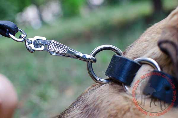 O-ring for Leash Attachment to Choke Collar