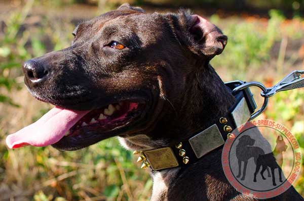 Pitbull leather collar for walking