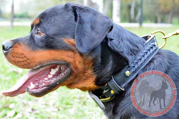 Braided Wide 2 ply Leather Rottweiler Collar