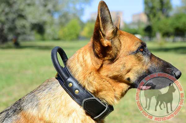 German Shepherd Leather Dog Collar with Control Handle