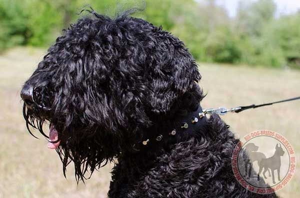 Black Russian Terrier Collar for Walking