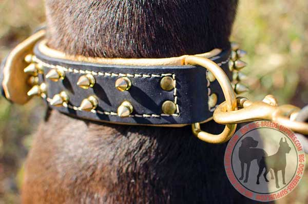 Strong D Ring for Leash