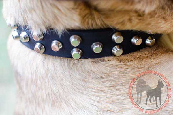 Designer Leather Collar for Dog Walking in Style