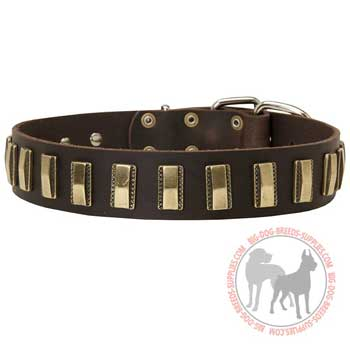 Pit Bull collar leather for showy promenades