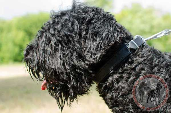 Leather Collar for Black Russian Terrier Training