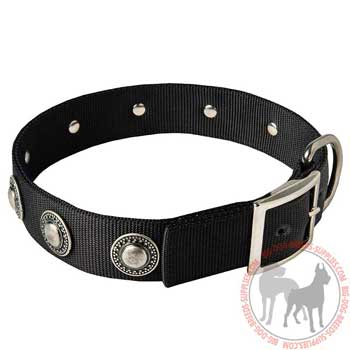 Nylon dog buckle collar with adornment