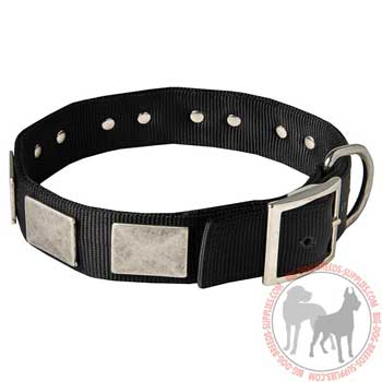 Dog nylon collar with traditional buckle