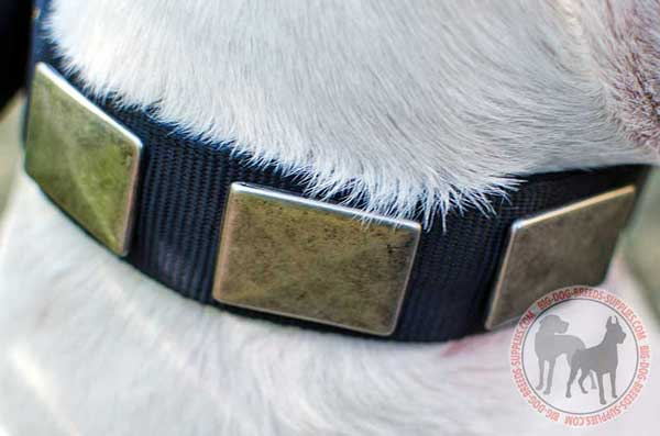 Nylon Dog Collar with Attractive Plates