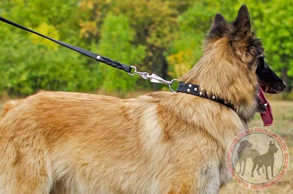 Tervuren Leather Dog Collar with Studs