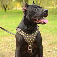 Designer Leather Pitbull Harness with Studded Chest Plate