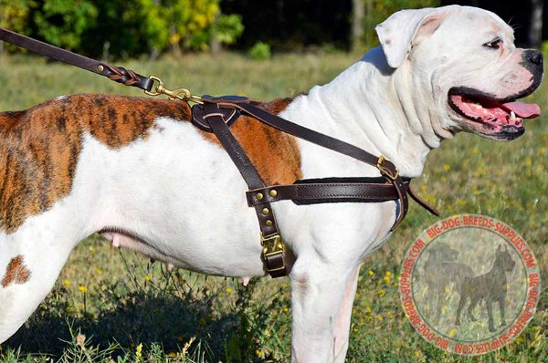 American Bulldog Leather Harness with Comfy Felt Padding
