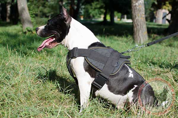 Nylon Amstaff harness helps keep your pet under control