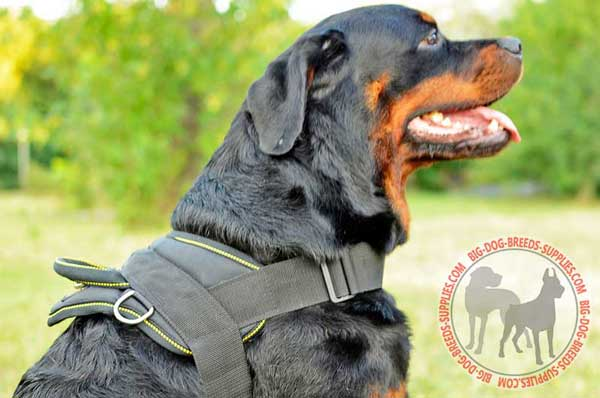 Nylon Rottweiler Harness for many kinds of training