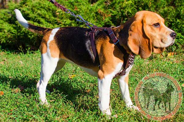 Leather Accesorry for Beagle Puppy