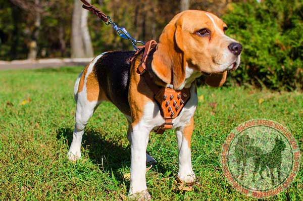 Fashion Leather Harness for Beagles