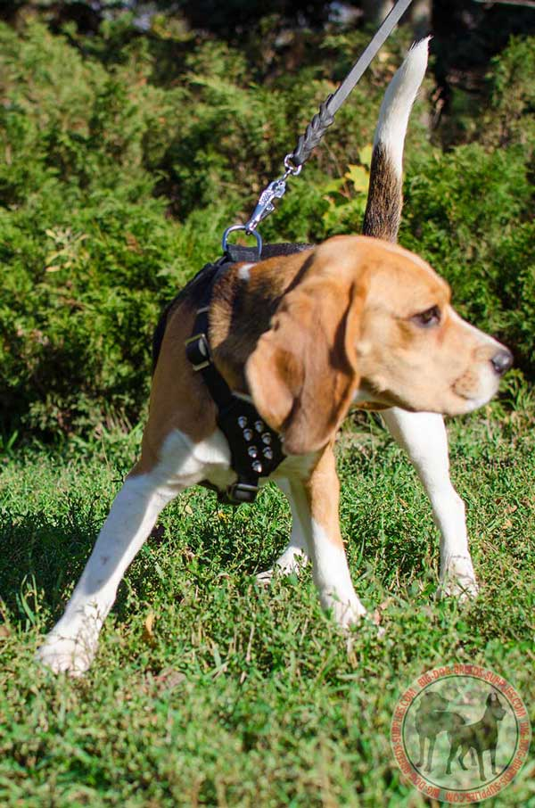 Beagle Leather Harness in Black Color