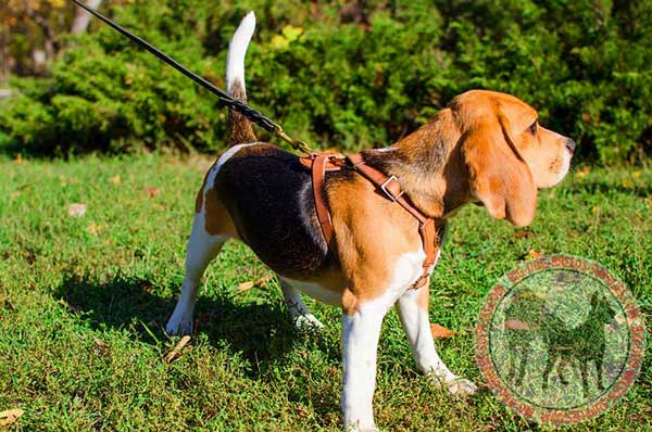 Beagle Harness for Walking