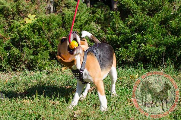Comfy Padded Harness for Beagles