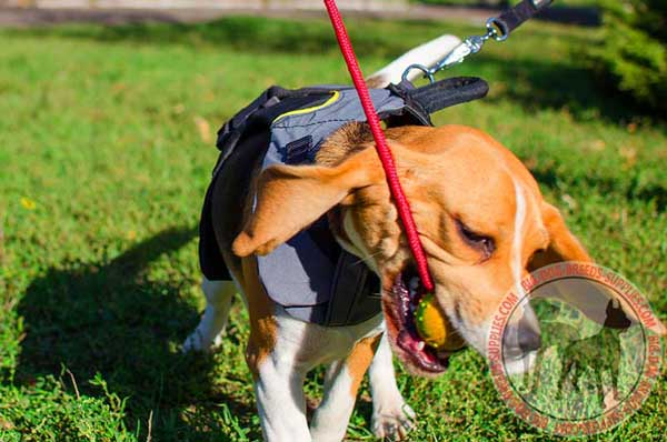 Beagle Waterproof Harness