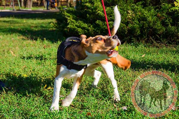 Tracking Harness for Beagles