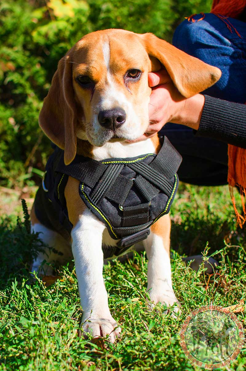 Get Nylon Dog Harness Cushion Like Chest Plate